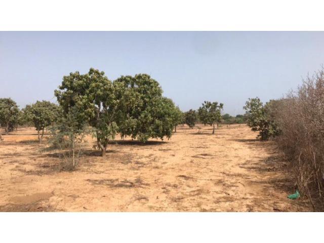 Terrain agricole en BAIL 30HA à NDIAR   9500frc/M²